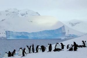 Antarktidoje ant seklumos užplaukus ledkalniui žuvo 150 tūkst. pingvinų