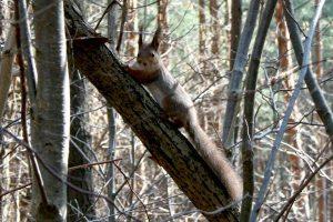 Kauno ugniagesiai gelbėjo voveriuką