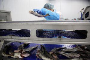 Žvejai sieks aukciono bankroto?