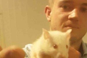 Gyvai žiurkei galvą nukandusiam australui uždrausta turėti augintinių