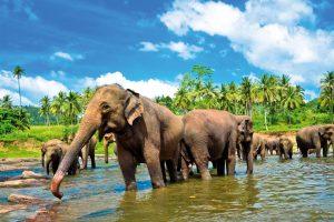 Egzotinės kelionės – norintiems draugauti su drambliais