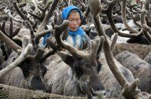 Rusijai elnių per daug – iki Kalėdų jų išskers 250 tūkst.