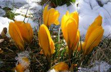 Orai: pavasaris jau įsidrąsina