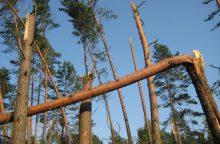 Būkite atsargūs: stiprus vėjas ant kelių prilaužė medžių