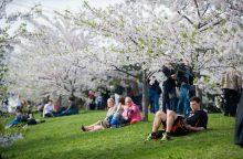 Ne visi džiaugiasi sužydėjusia gamta: kodėl svarbu nenumoti ranka į slogą pavasarį