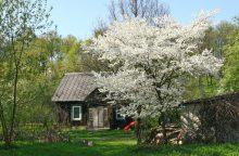 Siūloma griežtinti sodybų miške ir saugomose teritorijose atstatymą