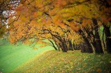 Savaitės orai: ruduo lepins ir toliau
