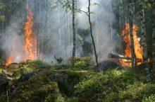 Dėl gaisrų pavojaus miškuose – skubus pasitarimas