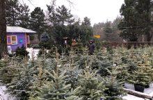 Prašo prieš šventes nesavivaliauti miškuose ir nekirsti eglučių