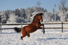 Šalta žiema džiaugsimės neilgai – permainos jau arti