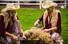 N. Bunkė toliau stebina: pati kerpa avis ir ruošia vilną drabužiams