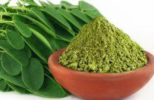 Aliejinė moringa: antioksidantų šaltinis <span style=color:red;>(receptai)</span>