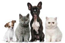 10 mitų apie kates ir šunis, kuriais galbūt tebetikite
