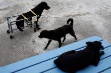 Vienos didžiausių šunų prieglaudų vadovė apkaltina keturkojų žudymu