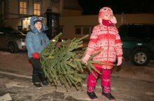 Kaip išsirinkti tinkamiausią Kalėdų eglutę?