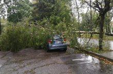 Stiprus vėjas Klaipėdoje stabdo uosto darbą, laužo medžių šakas