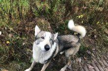 Pasieniečiai surado pasiklydusį medžiotojo šunį