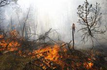Ugniagesiai įspėja: miškuose – didelis gaisrų pavojus
