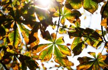 Sinoptikas: artimiausiomis dienomis džiugins šilti orai