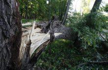 Stiprus vėjas visoje šalyje verčia medžius: per parą – beveik pusšimtis