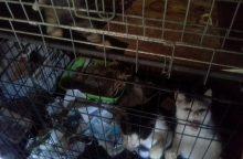 Už netinkamą elgesį su gyvūnais prieglaudai skyrė baudą