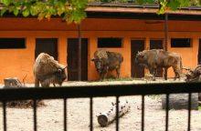 Zoologijos sodo rekonstrukciją perims ministerija?