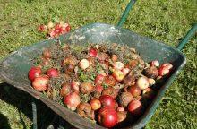 Pūvantys obuoliai šokdina kainas
