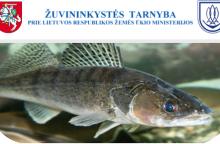 Paskelbtas Žuvininkystės tarnybos vadovo konkursas