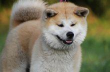 Kauno rajone policininkas nušovė merginą sukandžiojusį šunį