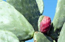Kolekcininkė: mitas, kad prie kompiuterio reikia auginti kaktusą