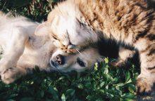 Išmesti kaip seni žaislai: Kauno prieglaudose kasmet atsiduria beveik 2 tūkst. gyvūnų