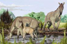 Ch. Darwino keisčiausias gyvūnas rado šeimą