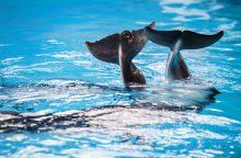 Prasmingos akcijos finišas: delfinų terapiją gavo 15 vaikų