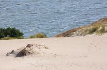 Neringoje norima įrengti paplūdimį Kuršių marių pakrantėje