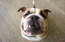 Gyvūnų savininkams – nauja interneto svetainė