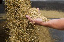 Grūdų rinkos bėdos: dabartinė situacija ūkininkams – kaip tiksinti bomba