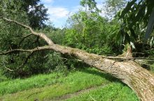 Mažeikių rajone žuvo medžio prispaustas žmogus
