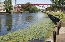"Bandys ""apgyvendinti"" Danės upę"
